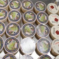 French cheese camembert tasting
