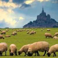 Tour Mont Saint Michel
