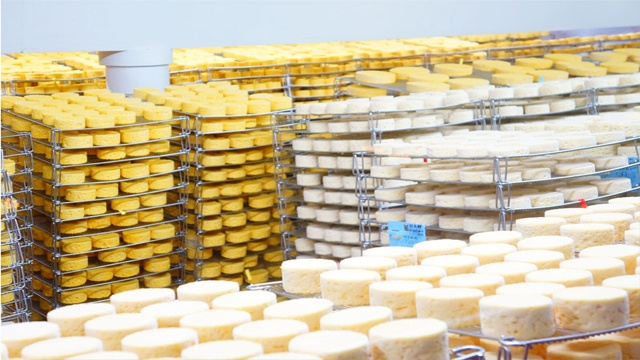 visit factory french cheese