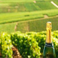 Champagne Private Tour