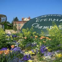 Visit Epernay - Private tour Champagne